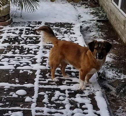 Brandy in snow