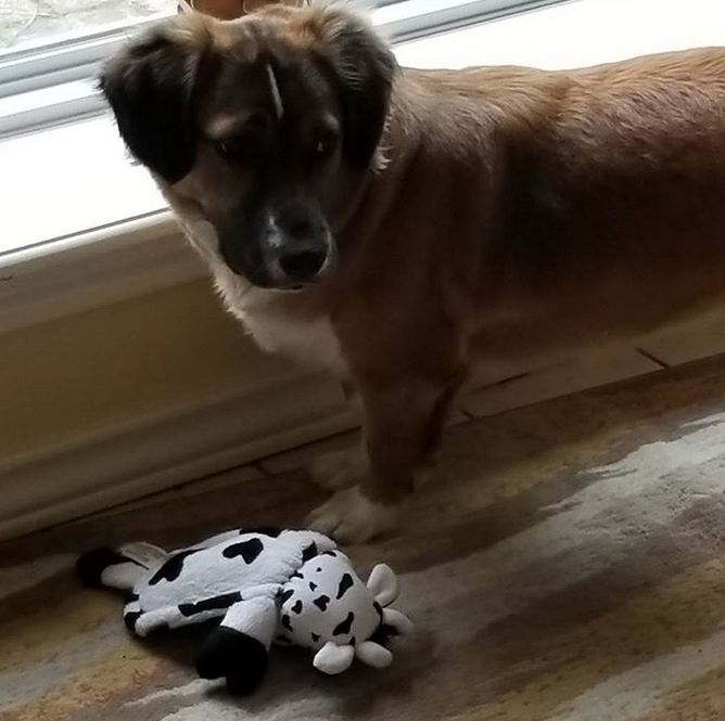 Brandy with her new toy
