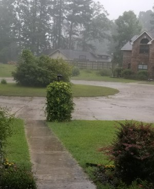 rain in our front yard
